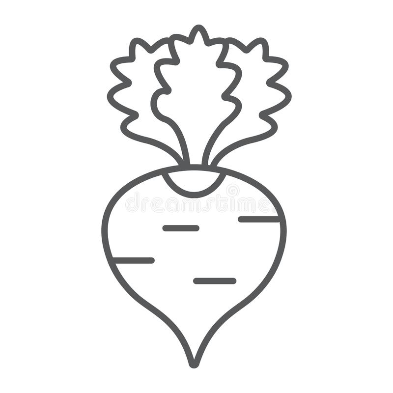 Radish thin line icon, fruits and vegetables, beetroot sign, vector graphics, a linear pattern on a white background. Radish thin line icon, fruits and vector illustration
