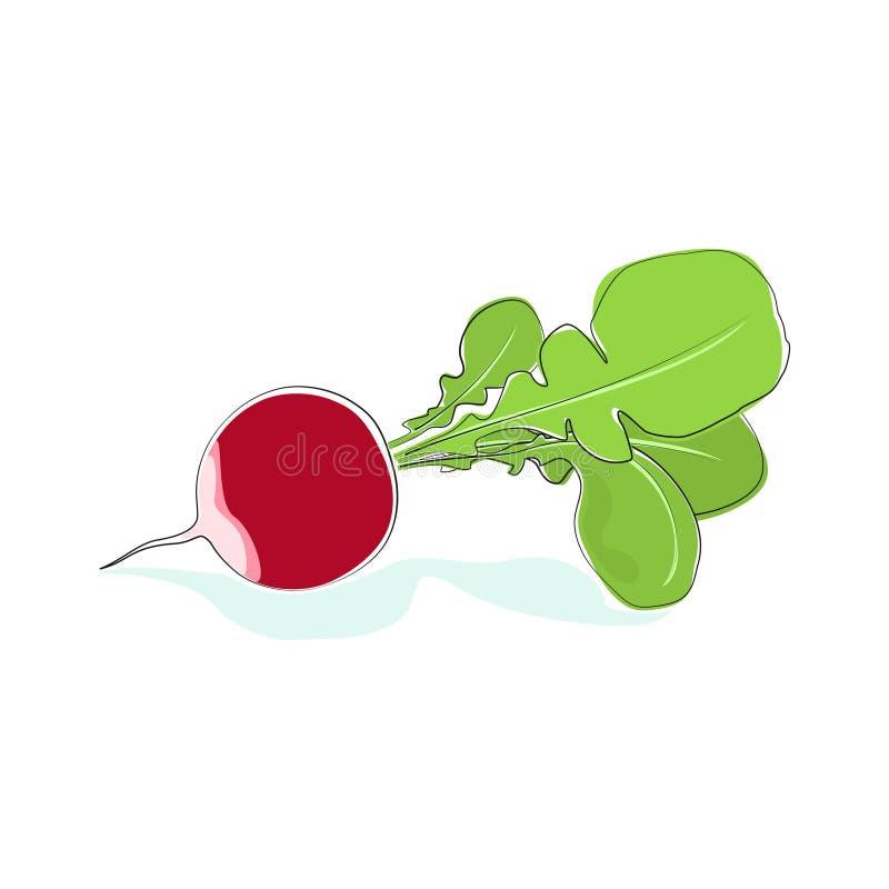 Radish Vegetable with Leaves Isolated on White. Radish, Vegetable Radish with Tops Isolated on White Background, Vector Illustration stock illustration