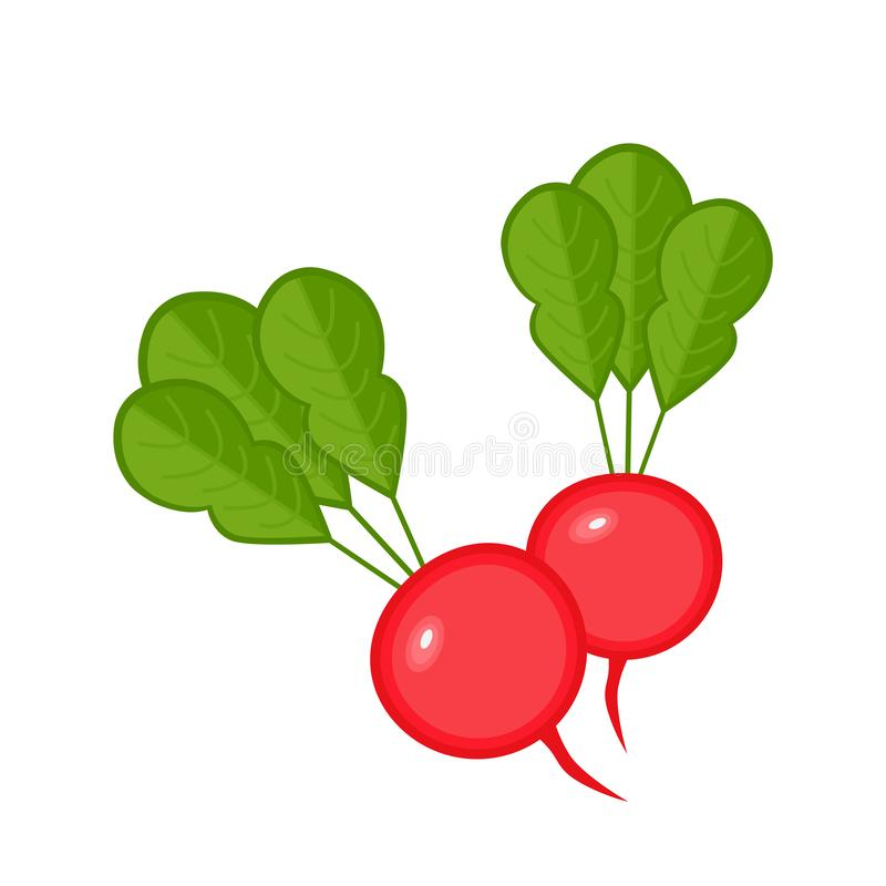 Radish vegetables icon vector illustration with green leaves. Fresh food design isolated on white background vector illustration