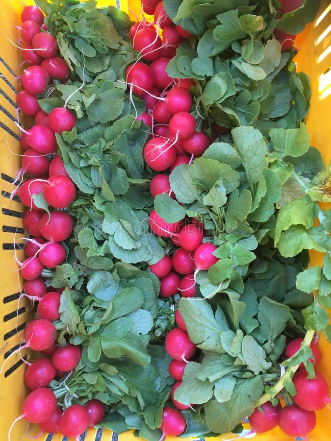 Radishes in crate for wholesale trade of vegetables at a farmers market stock photos