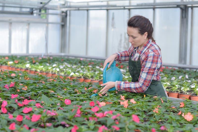 Radosne żeńskie ogrodniczki podlewania rośliny w szklarni obrazy royalty free