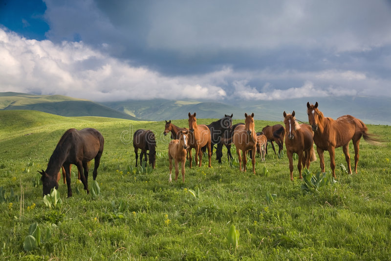 raduni i cavalli fotografia stock libera da diritti
