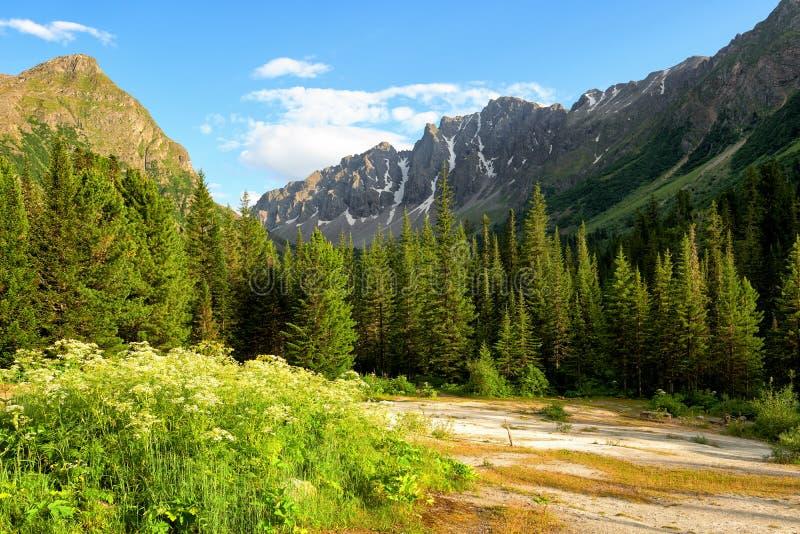 Radura del travertino vicino al taiga conifero scuro in montagne siberiane immagini stock
