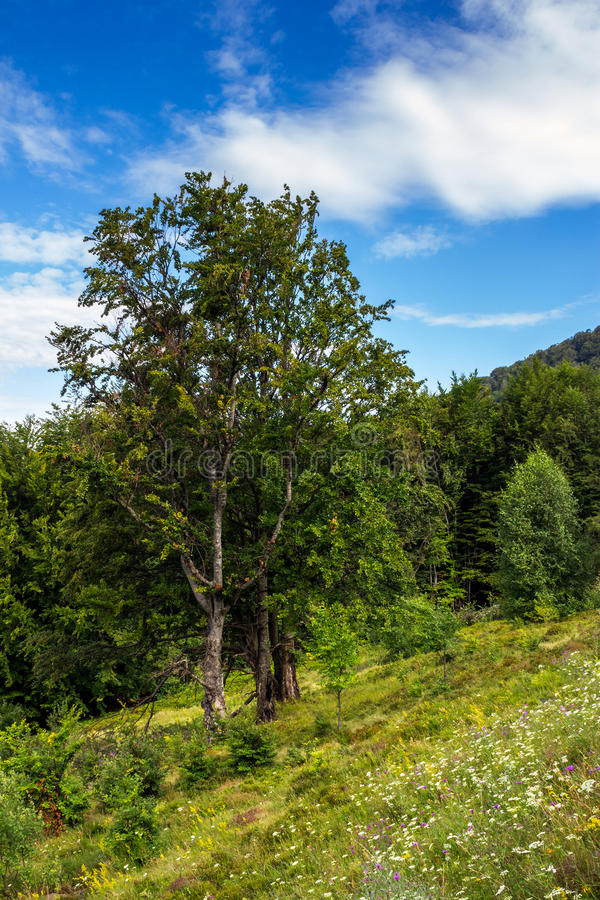 Radura della foresta in ombra degli alberi immagine stock