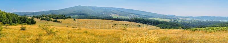 Radura gialla contro lo sfondo della foresta e montagne un chiaro giorno fotografie stock