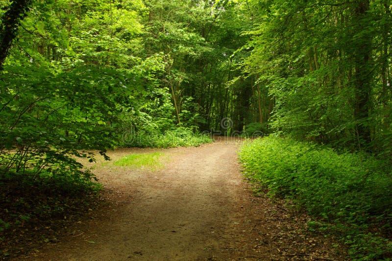 Radura nella foresta verde fotografie stock libere da diritti