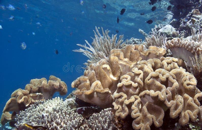 Raf Koralowa południe Pacyfik zdjęcia stock