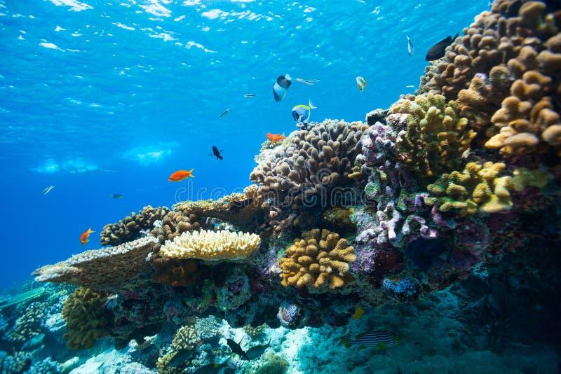 Rafa koralowa podwodna zdjęcie stock