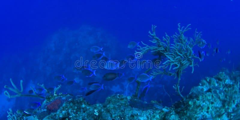 rafa koralowa sceny underwater zdjęcia royalty free