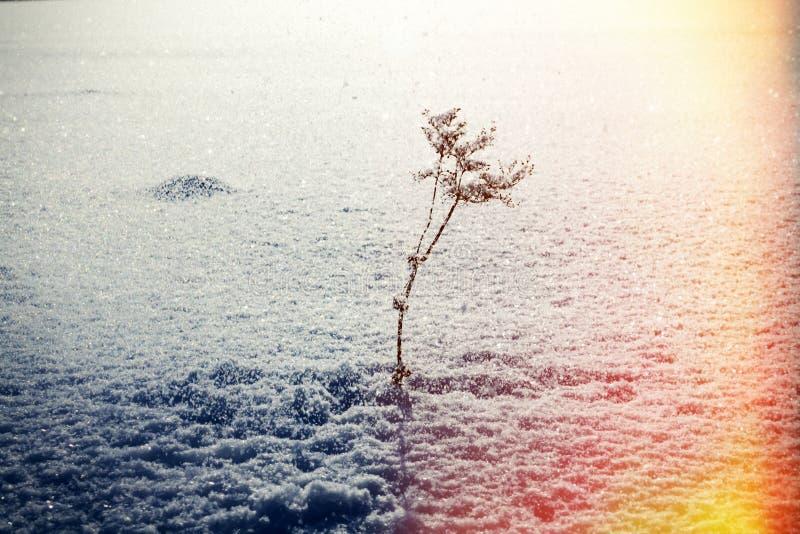 Raffica delle cadute della neve e del vento dall'albero sulla scrofa asciutta fotografia stock