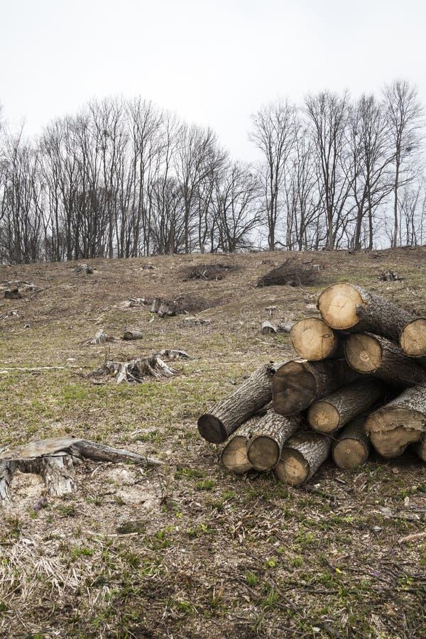 Rafforzi la raccolta con legname fotografia stock