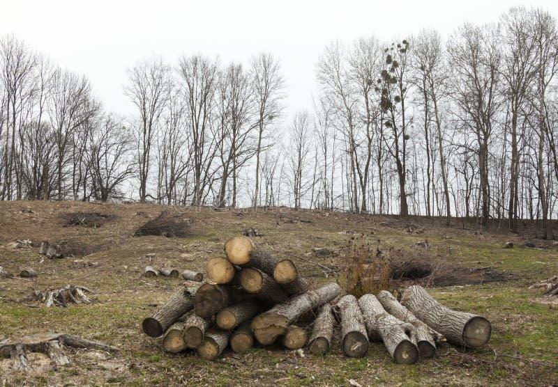Rafforzi la raccolta con legname immagine stock