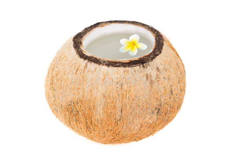 Rafrescamento tropical do coco fotos de stock royalty free