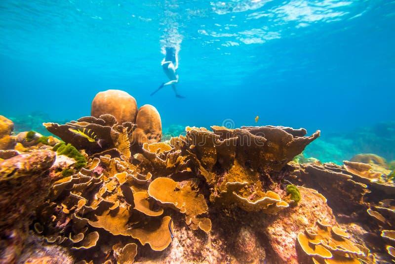 Rafy koralowa tło obraz royalty free