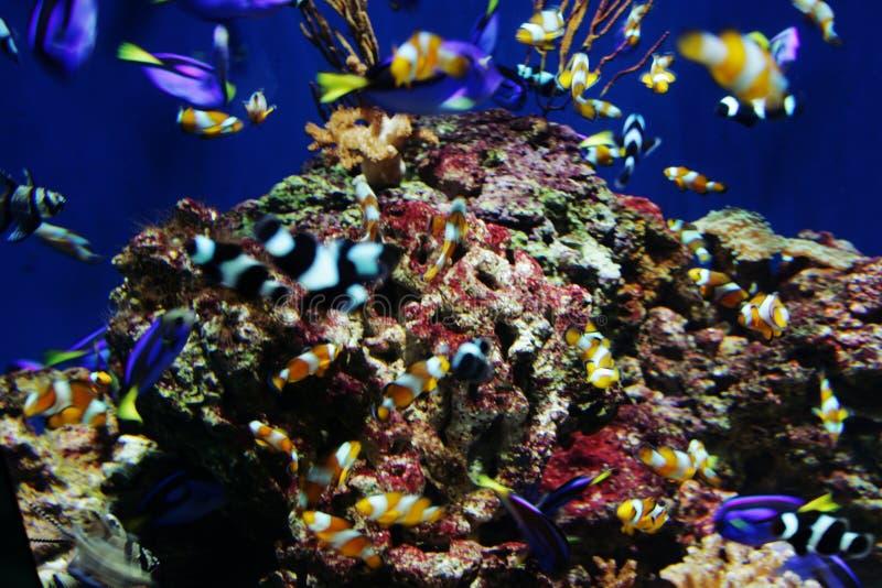 rafy koralowe zdjęcie royalty free