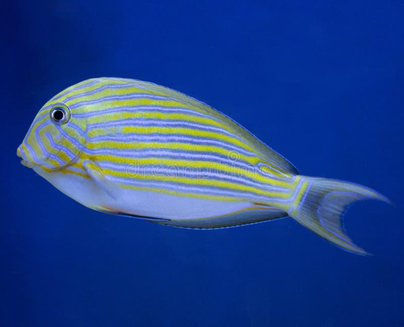 Rafy koralowej ryba filmowali w akwarium zdjęcia stock