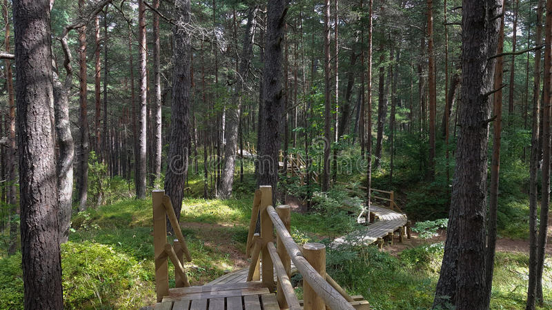 Ragakapa自然公园在Jurmala,拉脱维亚 库存照片