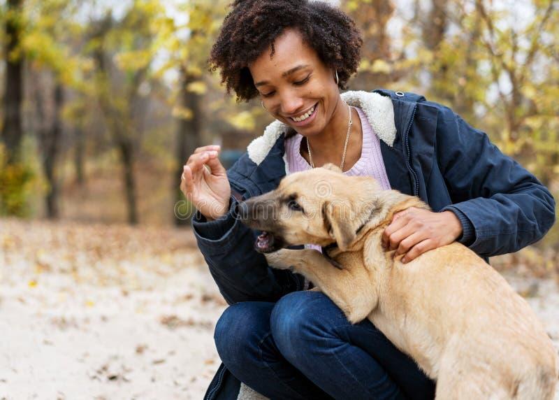 Ragazza afroamericana nel parco di autunno che gioca con il suo cane fotografia stock