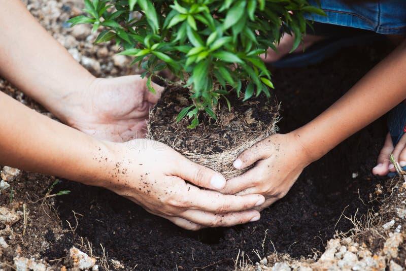 Ragazza asiatica del bambino che aiuta il suo genitore a piantare il giovane albero fotografie stock