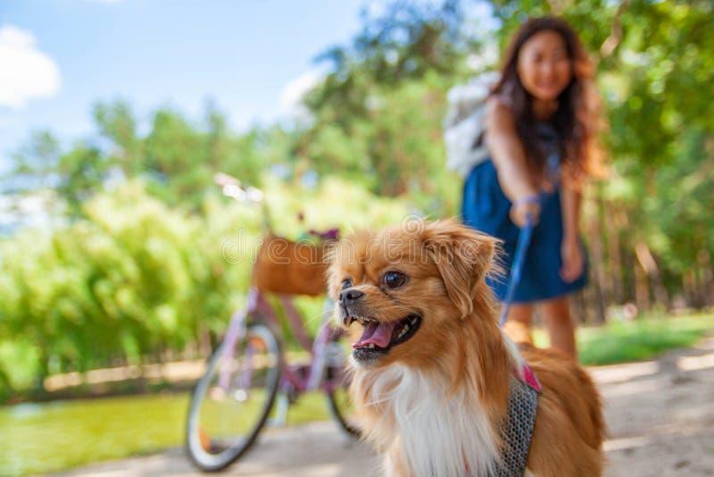 Ragazza asiatica sveglia con poco cane che cammina nel parco Donna che si siede sull'erba verde con il cane - all'aperto in ritra immagine stock libera da diritti