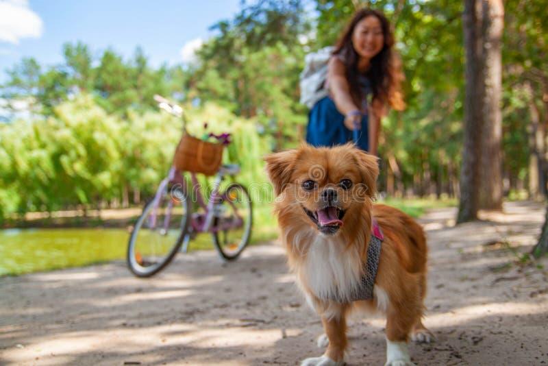Ragazza asiatica sveglia con poco cane che cammina nel parco Donna che si siede sull'erba verde con il cane - all'aperto in ritra fotografia stock