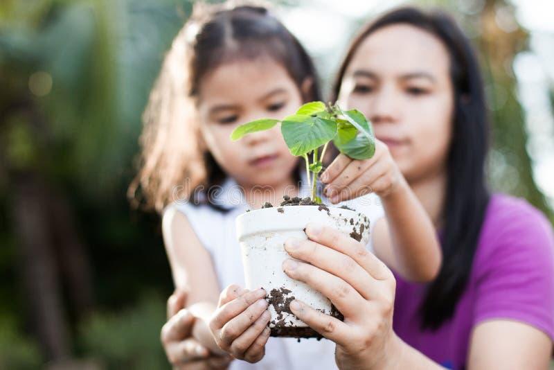 Ragazza asiatica sveglia e genitore del piccolo bambino che tengono giovane albero immagini stock libere da diritti