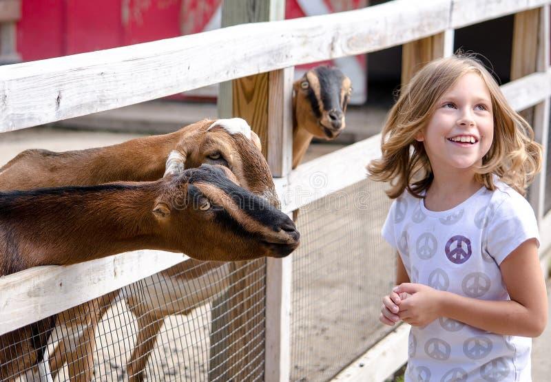 Ragazza bionda che ride di tre capre molto amichevoli fotografie stock