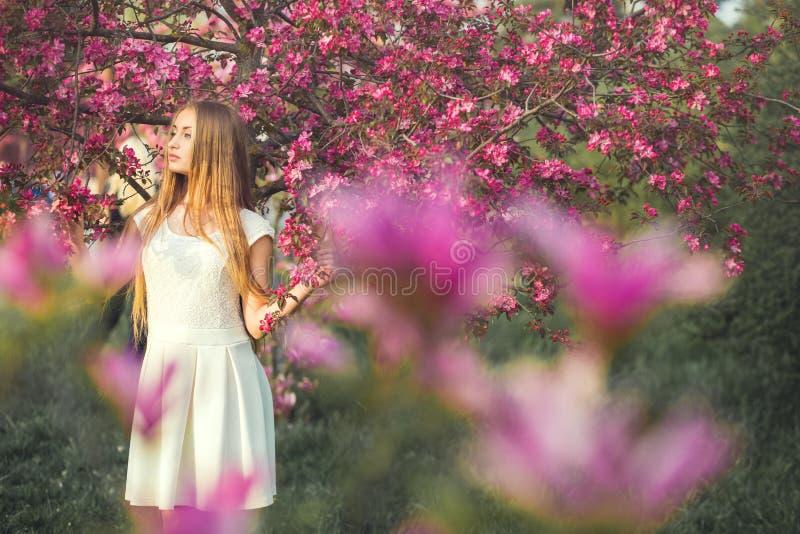 Ragazza bionda sensuale che tiene ramo di fioritura di sakura alla luce solare calda Concetto della sorgente fotografia stock