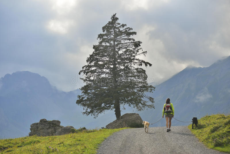 Ragazza che cammina con i suoi cani vicino a Oeschinensee, Kandersteg switzerland fotografia stock libera da diritti