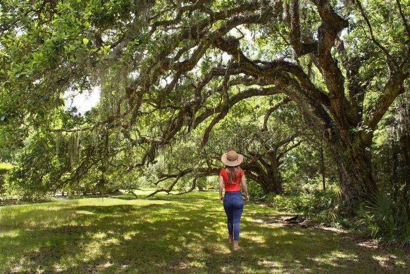 Ragazza che cammina da solo sulla via sotto le belle querce enormi sulla mattina di estate immagine stock