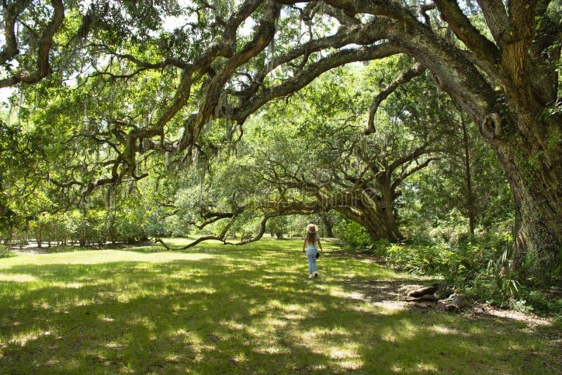 Ragazza che cammina da solo sulla via sotto le belle querce enormi sulla mattina di estate immagini stock