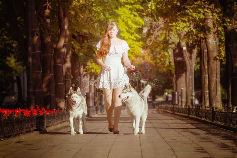 Ragazza che cammina giù la via con due cani fotografie stock