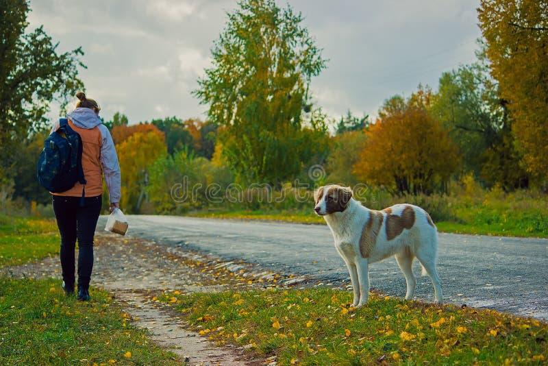 ragazza che cammina nel parco con il suo gioco del cane immagini stock