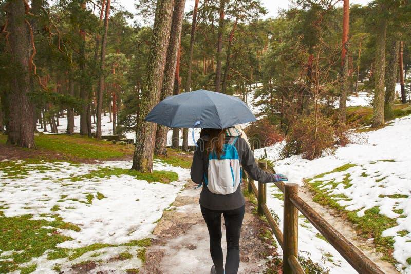 Ragazza che cammina nella neve con un ombrello a disposizione, indietro immagini stock