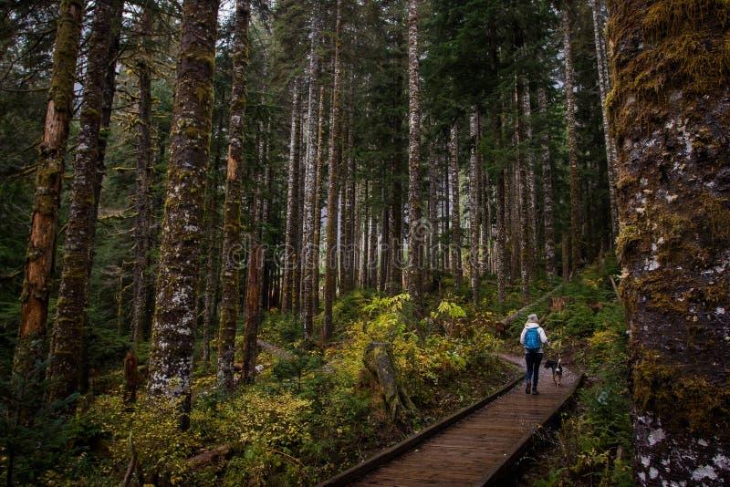 Ragazza che fa un'escursione con il cane in foresta fotografia stock libera da diritti