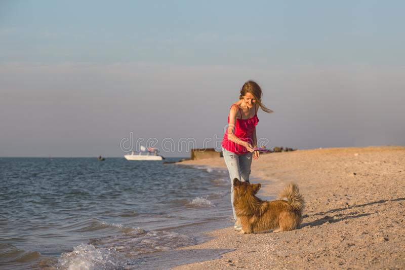 Ragazza che gioca con un cane sulla spiaggia fotografia stock libera da diritti