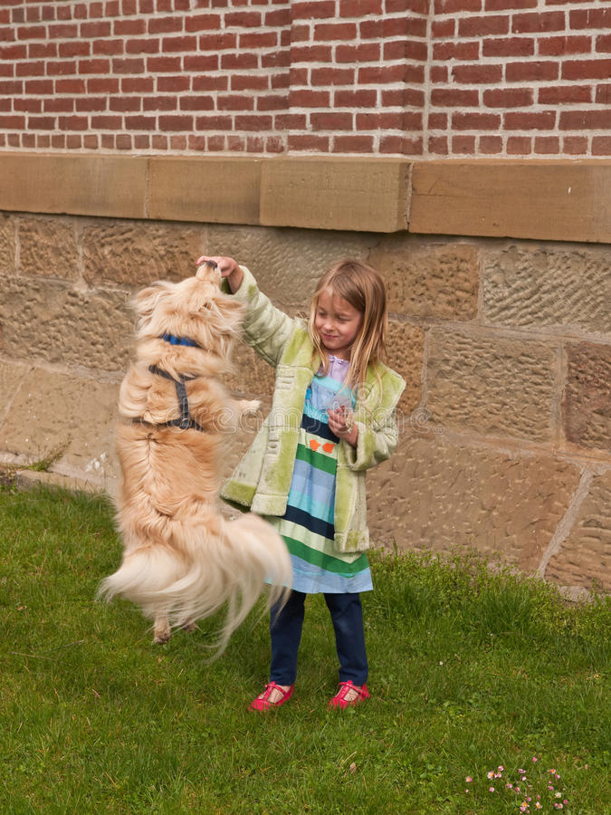 Ragazza che gioca con un piccolo cane di salto immagini stock