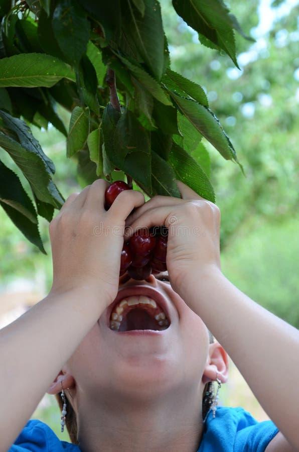 Ragazza che mangia le ciliege fuori dell'albero immagine stock