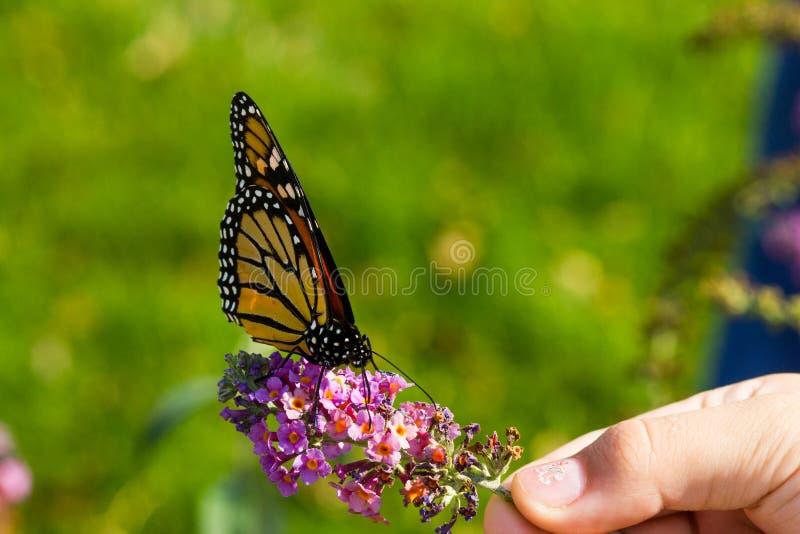 Ragazza che tiene un fiore con una farfalla di monarca immagine stock
