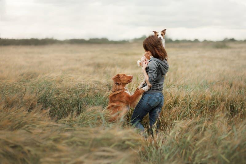 Ragazza con i cani nel campo fotografia stock libera da diritti