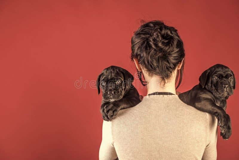Ragazza con i mastini neri Cucciolo di corso della canna alla mano femminile immagini stock libere da diritti
