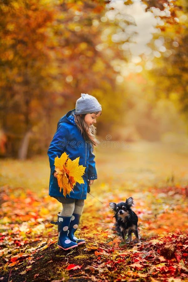 Ragazza con il cane della chihuahua nel parco di autunno immagine stock libera da diritti
