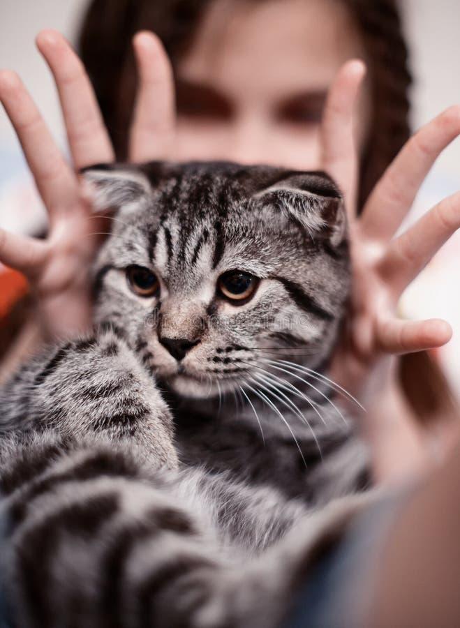 Ragazza con il gatto di tabby sveglio fotografia stock