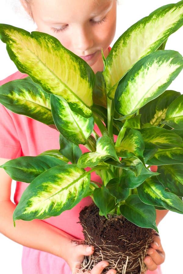 Ragazza con il houseplant fotografia stock