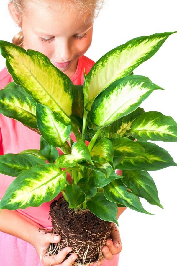 Ragazza con il houseplant fotografia stock libera da diritti