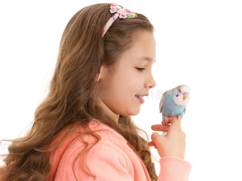 Ragazza con il pappagallino ondulato addomesticato dell'uccello dell'animale domestico fotografie stock libere da diritti