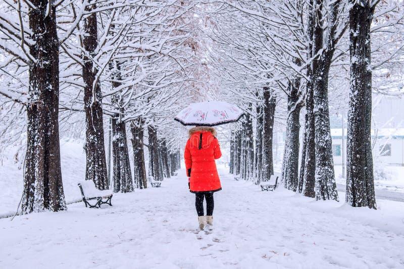 Ragazza con l'ombrello che cammina sul percorso e sull'albero di fila Inverno fotografia stock