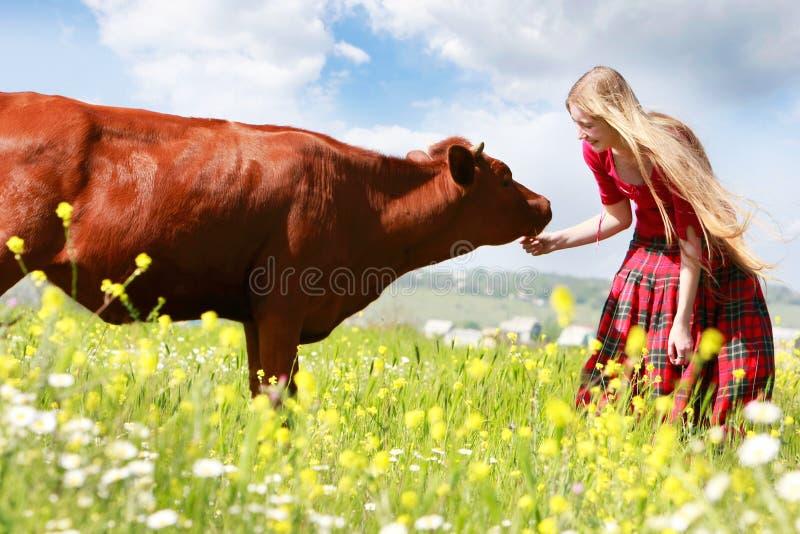 ragazza d'alimentazione della mucca felice immagine stock