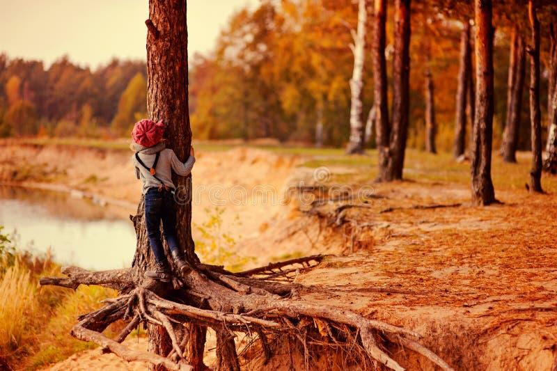 Ragazza del bambino che scala vecchio pino sulla passeggiata dal lato del fiume di autunno fotografia stock