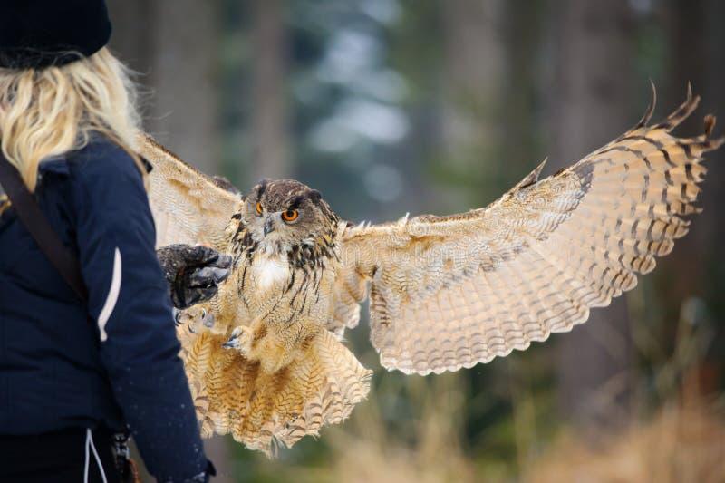 Ragazza del falconiere dalla parte posteriore con la foresta di inverno di Eagle Owl del eurasian di volo di atterraggio e del gu fotografia stock libera da diritti